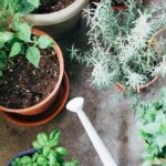 How to maintain, harvest and enjoy a Vegetable Container Garden