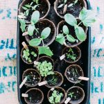 How to Grow a Veggie Container Garden